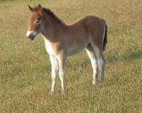 Dora's Foal 2