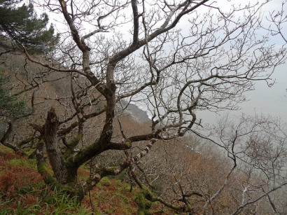 culbone-woods